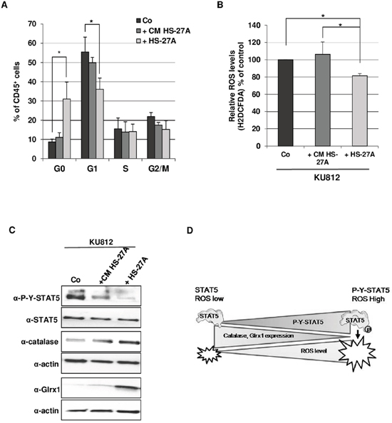 Contact with stromal cells promotes quiescence and reduction of STAT5-mediated oxidative stress in Bcr-Abl+ leukemia cells.