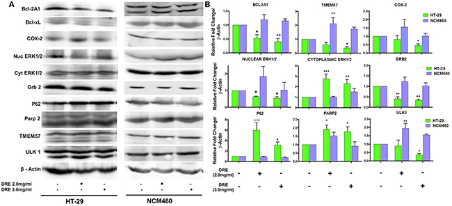 Activation of multiple signaling pathways by dandelion root extract.