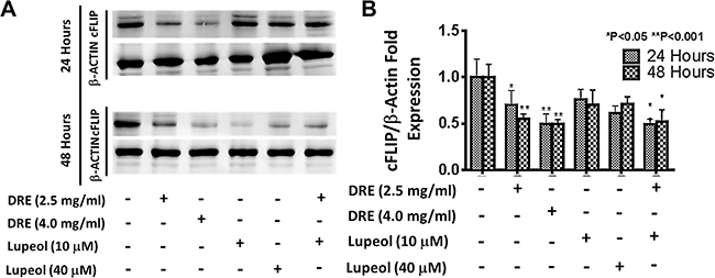 Dandelion root extract targets the extrinsic pathway of apoptosis by inhibiting the expression of cFLIP comparing the effect of DRE and lupeol on the expression of cFLIP.