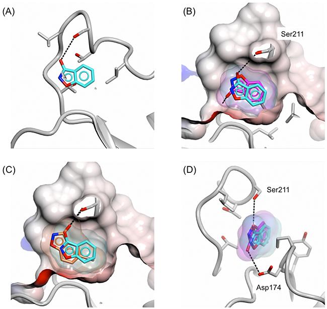 Binding mode of 5-fluoro/bromo-3-hydroxybenzisoxazole to the adenine-binding subsite.
