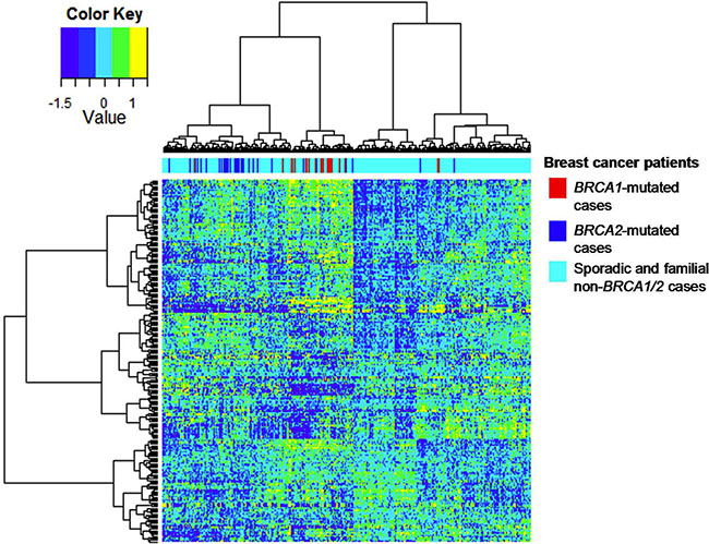 Hierarchical cluster analysis of the mRNA dataset for BRCA1/2 breast carcinomas on the basis of gene expression of mapped BRCA1-deficient proteins.