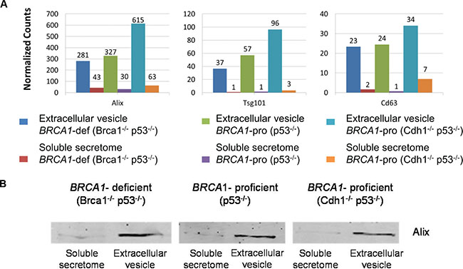 Exosome-associated proteins identified in soluble secretome and extracellular vesicle fractions.