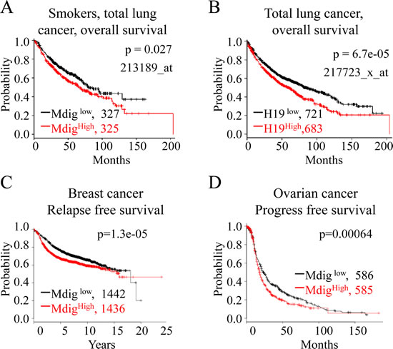 Higher expression of mdig and H19 is associated with poorer survival of cancer patients.