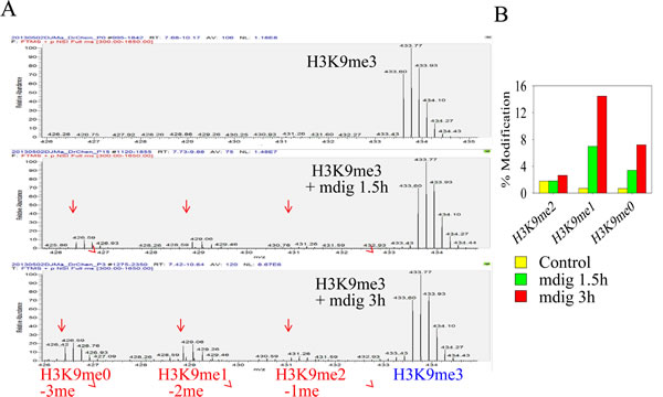 Immunoprecipitated mdig from mdig-GFP expressing cells can demethylate H3K9me3.