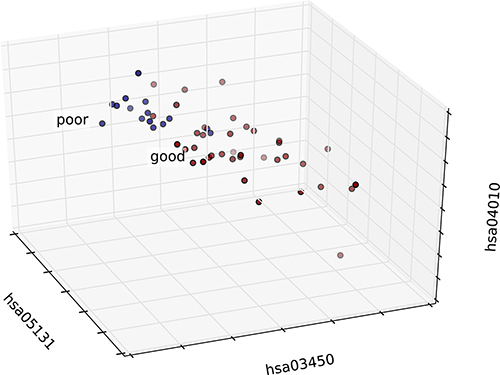 3D graph of patient distribution based on risk-associated pathways in the tumor.