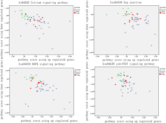 Analysis of patient distribution based on risk-associated pathways in tumor tissue.