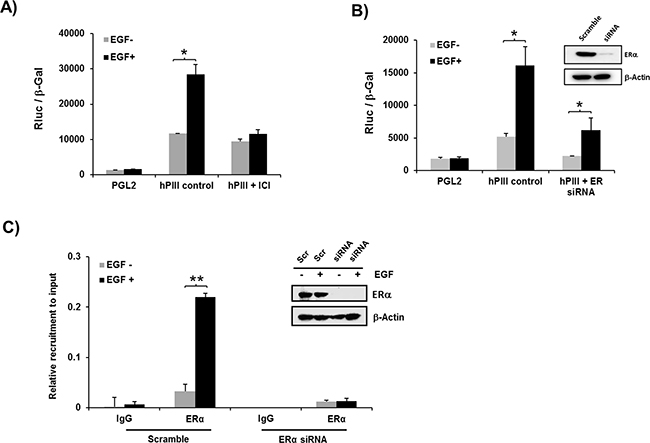 Role of ERα on EGF induced promoter activity A, B. and recruitment of ERα to the PRLR promoter C.