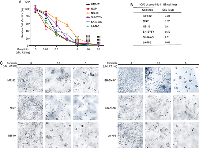 Ponatinib shows cytotoxic effects on NB cell lines.