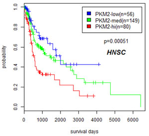 Overexpression of PKM2 correlated with poor prognosis in head and neck cancers.
