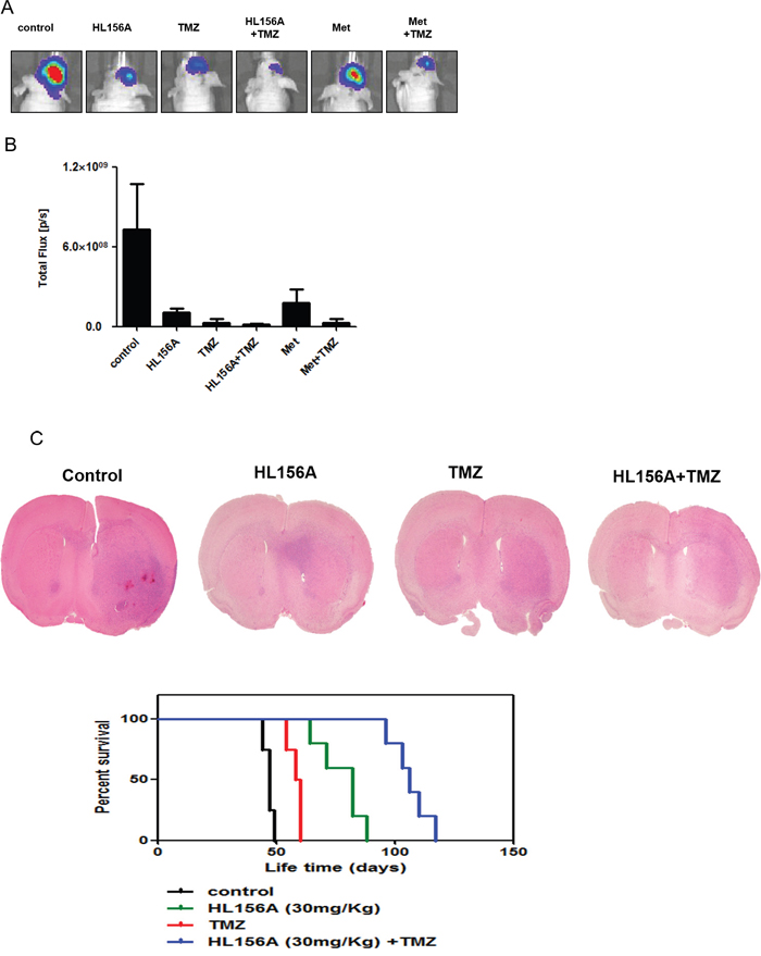 Effects of HL156A and combined HL156A and TMZ treatment on xenograft tumor growth and animal survival.