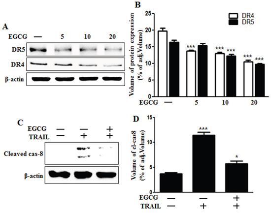 EGCG decreased the protein levels of death receptors.