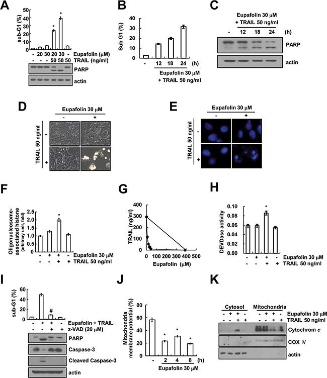 Eupafolin sensitizes TRAIL-induced apoptosis in Caki cells.