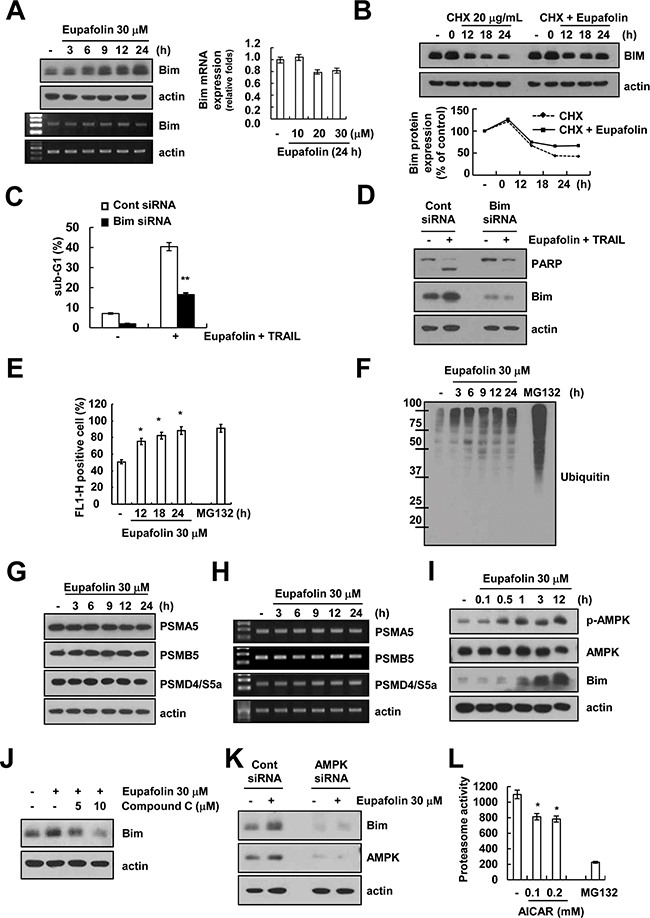 Eupafolin induces up-regulation of Bim expression through AMPK-mediated inhibition of proteasome activity.