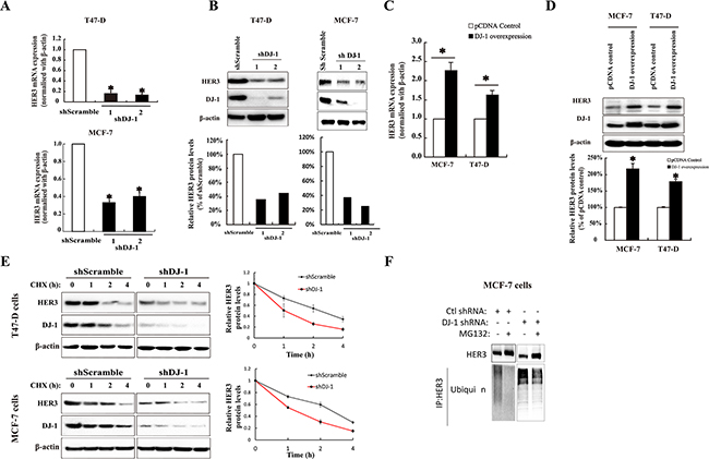 The effect of DJ-1 on HER3 mRNA, protein expression, and protein stability in breast cancer cells.