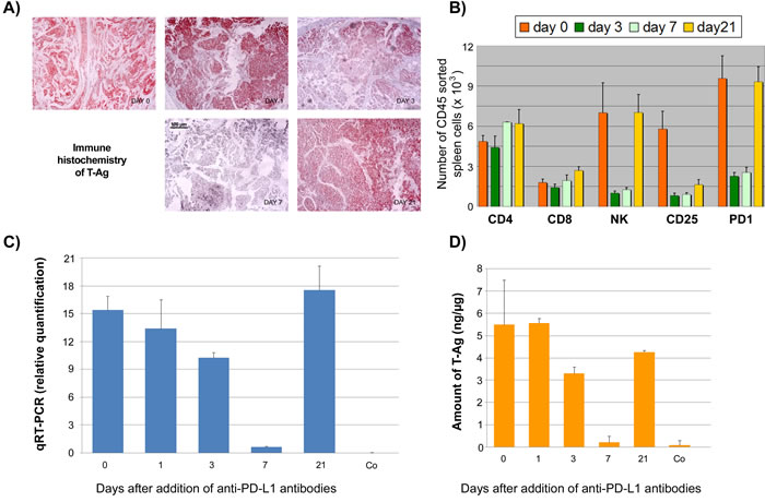 Time course analysis of the effects of anti-PD-L1 treatment of NP8 tumor mice.