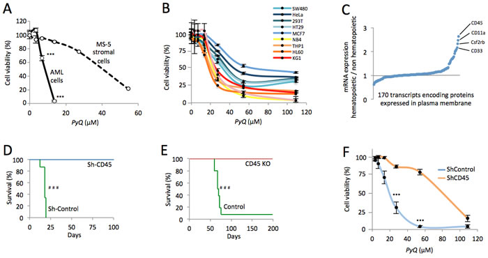 CD45 expression is essential for AML and hematopoietic cells expressing CD45 are more sensitive to