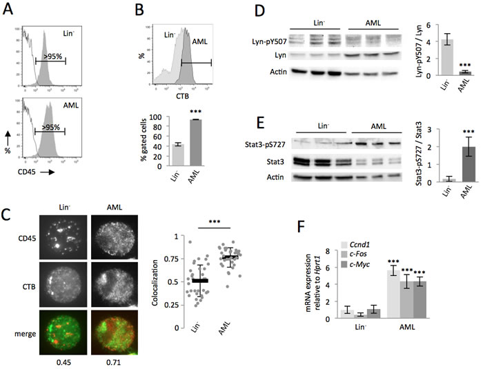 Compared with the non-transformed hematopoietic cells, CD45 colocalized within lipid rafts in AML cells, which enhanced the Lyn/Stat3 pathway.