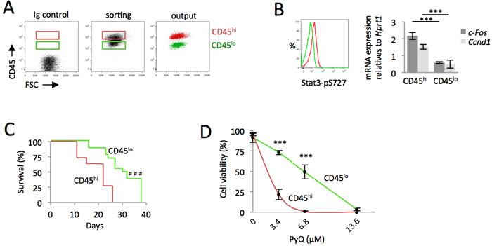 AML cells expressing high level of CD45 are more leukemogenic and sensitive to