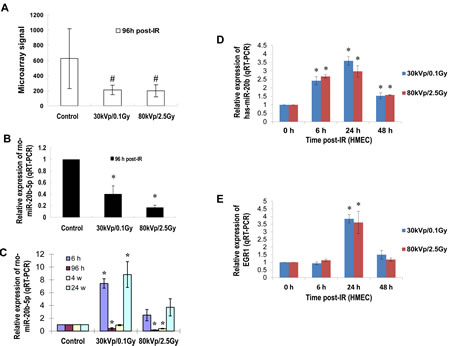 IR induces miR-20b expression in mammary gland tissues/cells in a dose- and time-dependent manner.