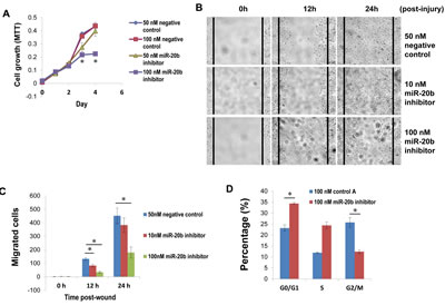 miR-20b inhibitor suppresses breast cancer cell proliferation and migration, as well as induces G