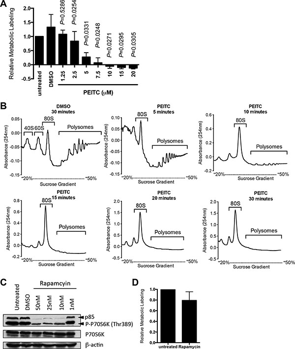 PEITC inhibits global mRNA translation in MCF7 cells.