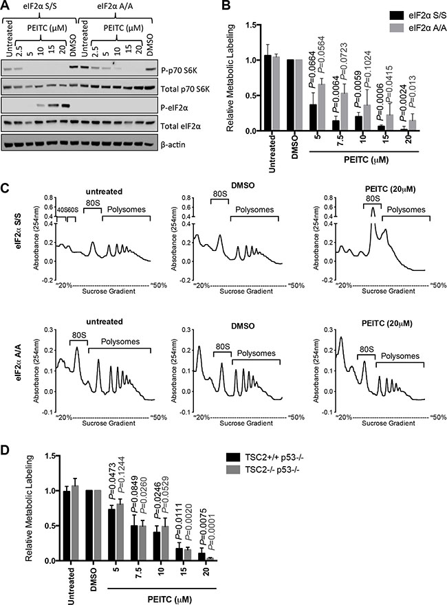 eIF2α phosphorylation is required for optimal PEITC-induced inhibition of mRNA translation.