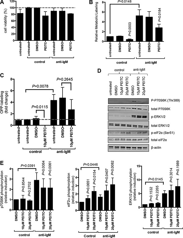 Effect of PEITC on basal and anti-IgM-induced mRNA translation in primary human leukemia cells.