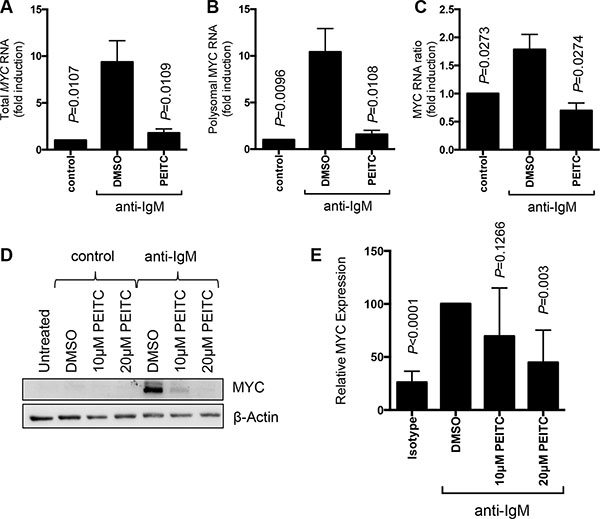 Effect of PEITC on MYC regulation.