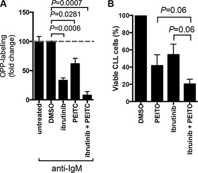 Effect of PEITC in combination with ibrutinib on cell viability and mRNA translation.