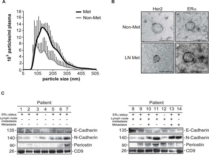 Characterization and validation of exosomes isolated from patients with non-metastatic or metastatic breast cancer.