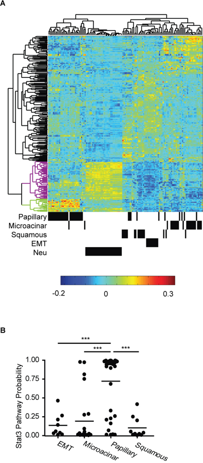 Stat3 has diverse functions in MMTV-Myc and MMTV-Neu tumors.