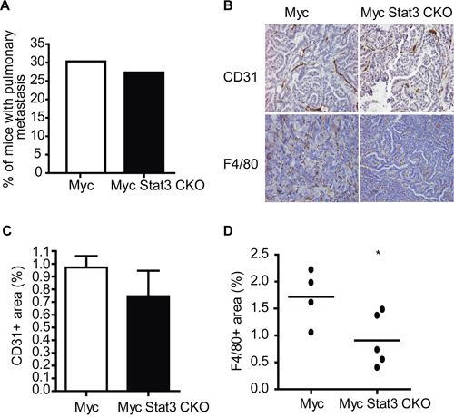 STAT3 ablation impairs angiogenesis and inflammation.