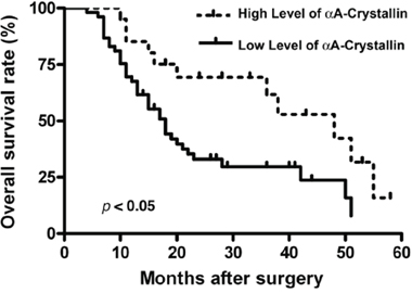 Prognostic significance assessed by Kaplan-Meier survival curves and log-rank tests.