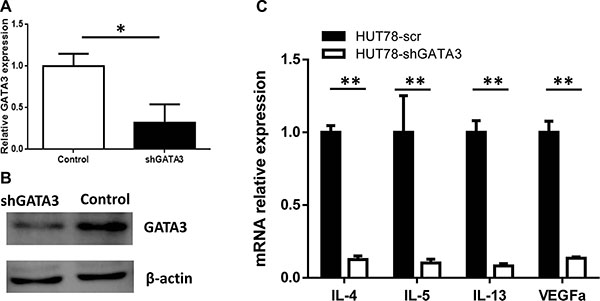 GATA3 knockdown in T lymphoma cell lines leads to the decreased expression of TH2-associated cytokines.