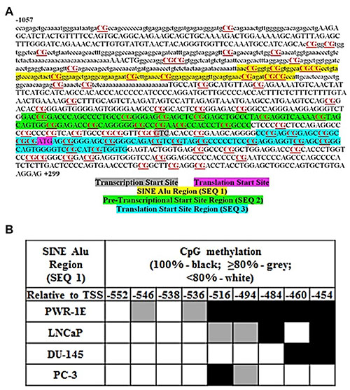 MIEN1 putative promoter region and potential methylation sites.