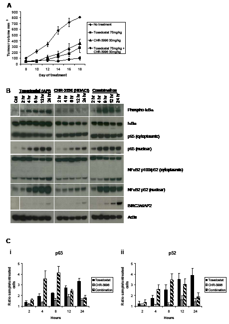 CHR-3996 is synergistic with Tosedostat (CHR-2797) in an in vivo model and causes rapid activation followed by down-regulation of NFκB signalling.