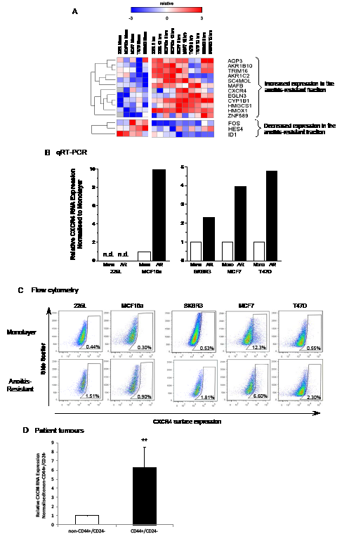 CXCR4 RNA and protein expression is increased in anoikis-resistant cells.