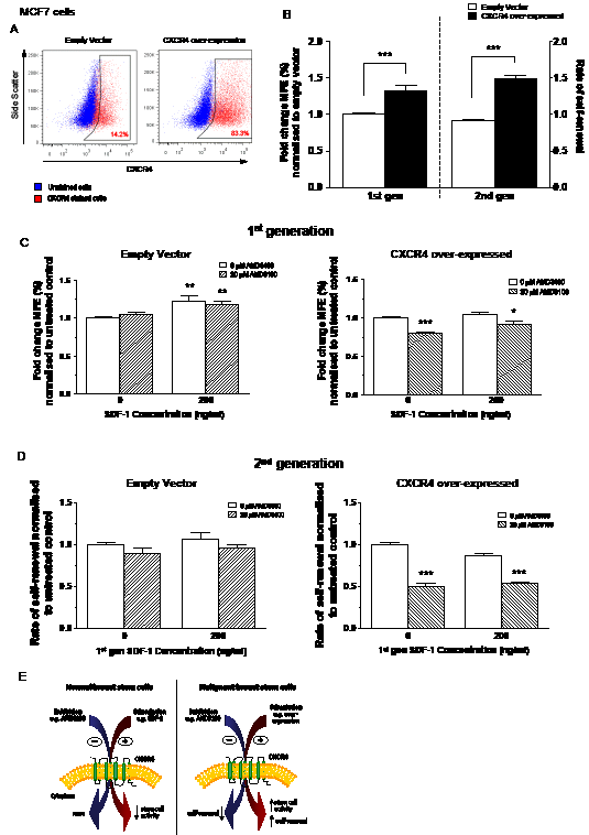 Effects of inhibition and stimulation of CXCR4 signalling on stem cell activity of CXCR4 over-expressing MCF7 cells.