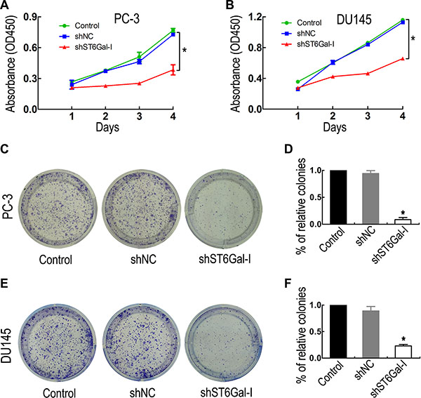 ST6Gal-I downregulation inhibited PCa cell proliferation and colony formation ability.