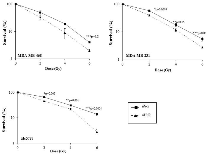 HuR silencing radiosensitizes human triple negative breast cancer cells.