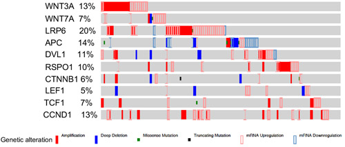 Alterations in the members of Wnt signalling pathway in human ovarian cancer patients.