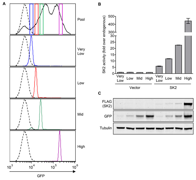 Generation of NIH3T3 stable cell lines with varying levels of constitutive SK2 overexpression.