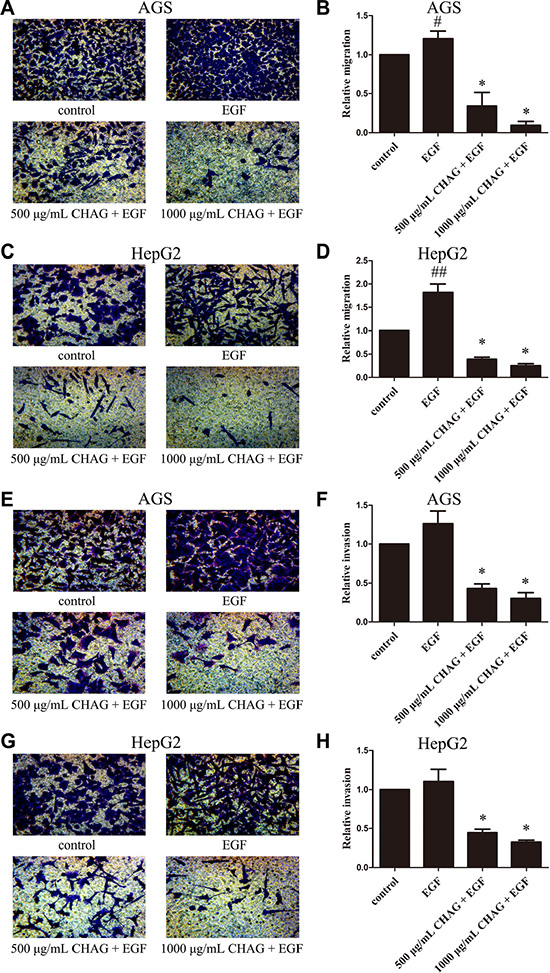 CHAG inhibits migration and invasion activities of gastric and hepatic cancer cells.