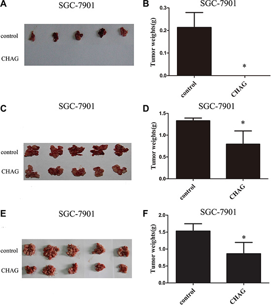 CHAG inhibits colonization and growth of gastric cancer cells in peritoneal cavity.