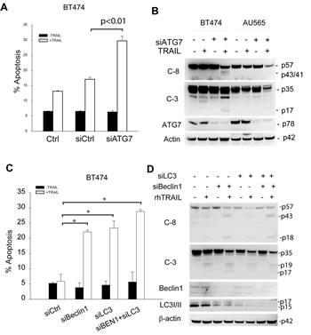 Enhancement of TRAIL sensitivity by silencing autophagy regulatory genes.