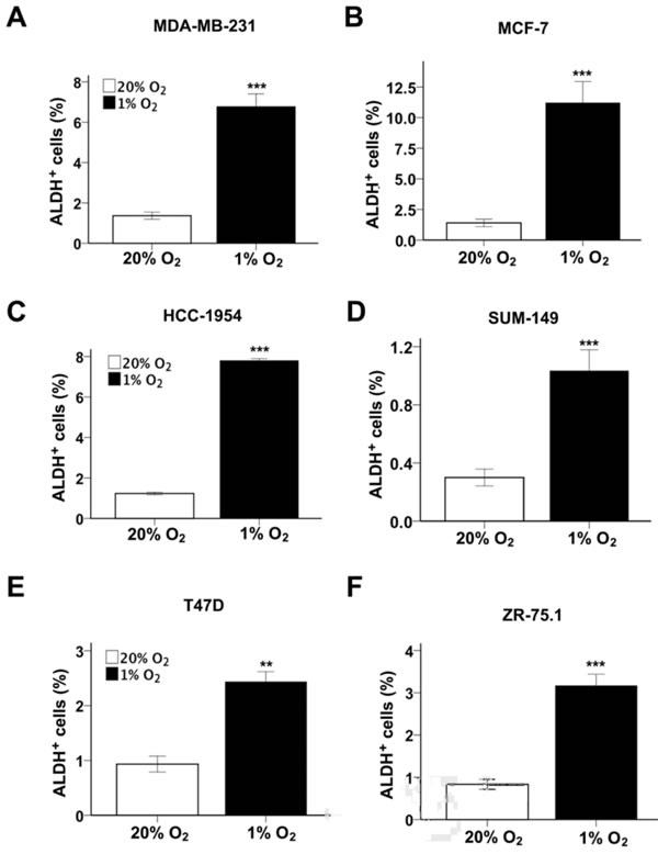 Hypoxia induces BCSC enrichment.