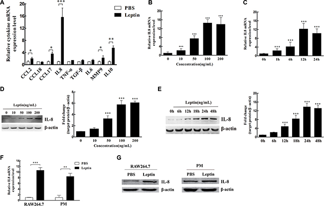 Leptin induced IL-8 production in M2 macrophages.