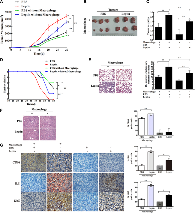 Leptin promoted breast cancer growth and metastasis in mouse xenograft model.