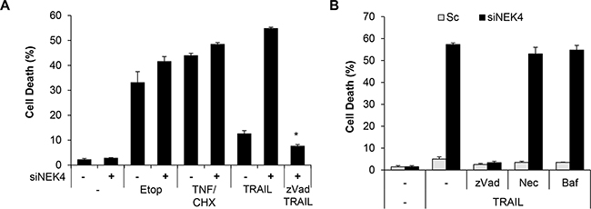 Downregulation of NEK4 induces apoptotic cell death in TRAIL-treated cells.