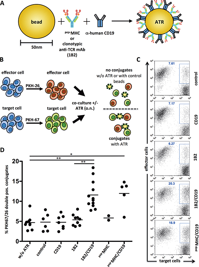 ATR induce antigen-specific conjugate formation.